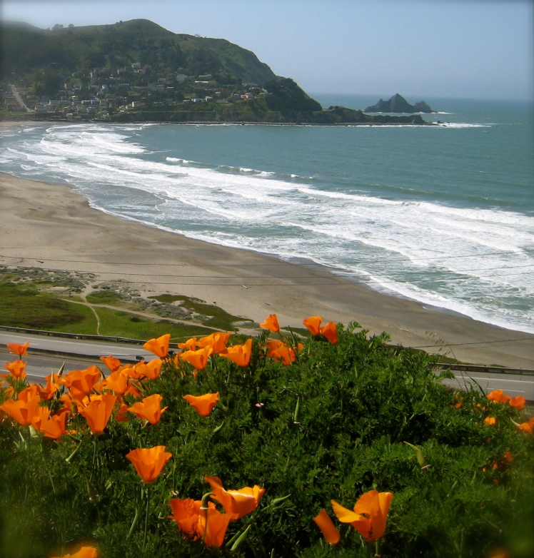 CA Poppies, Lindamar Beach, Pacifica CA